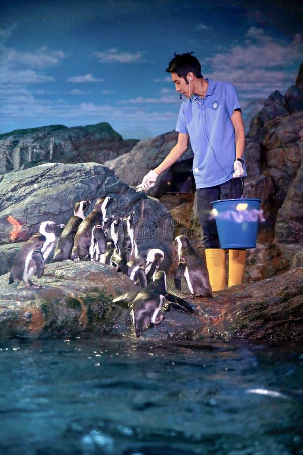 企鹅哺养 库存照片