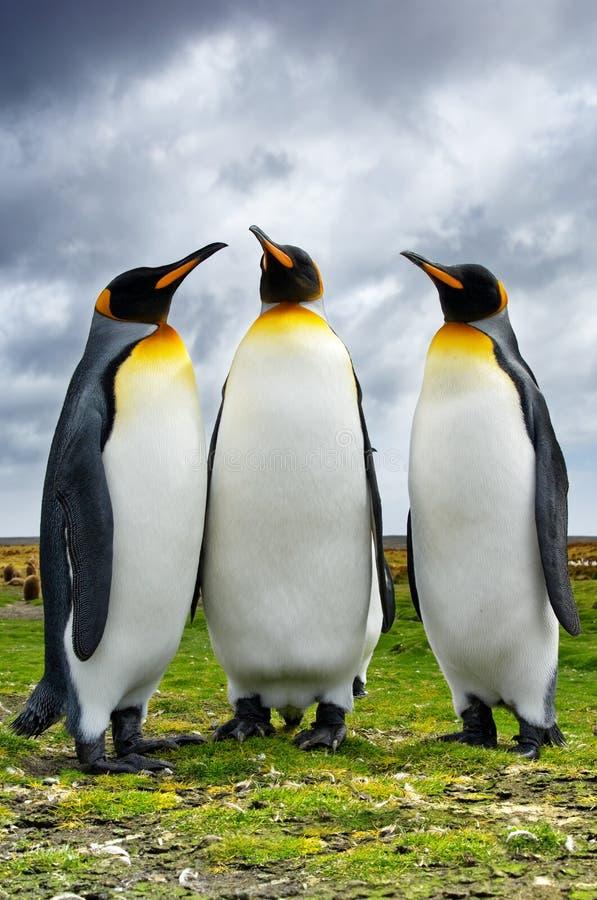 企鹅国王三 库存图片