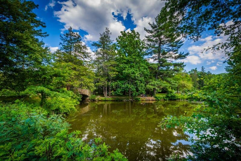 伊丽莎白公园的池塘,在哈特福德,康涅狄格 库存照片