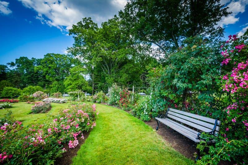 伊丽莎白的玫瑰园在哈特福德停放,康涅狄格 免版税库存照片