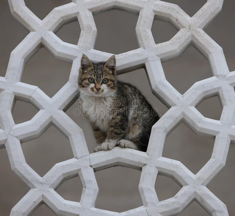 伊斯兰教雕刻构筑的猫在法提赫Camii Istan 免版税图库摄影