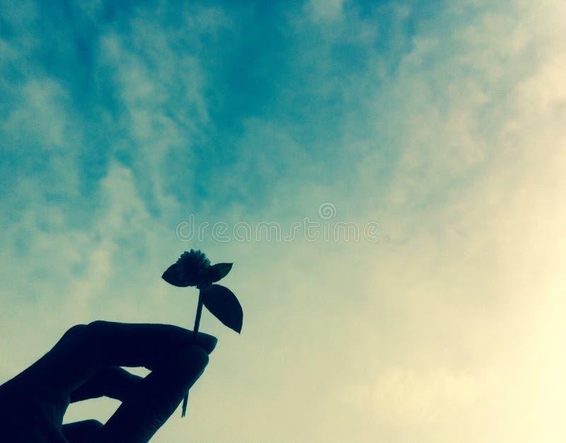 伊斯坦布尔照片和加拉塔,太阳,日落,海,鸥,艺术性的大厦, alatea,节目ta,节目ta, Galatia,得意扬扬, Gallard,节目, 库存照片