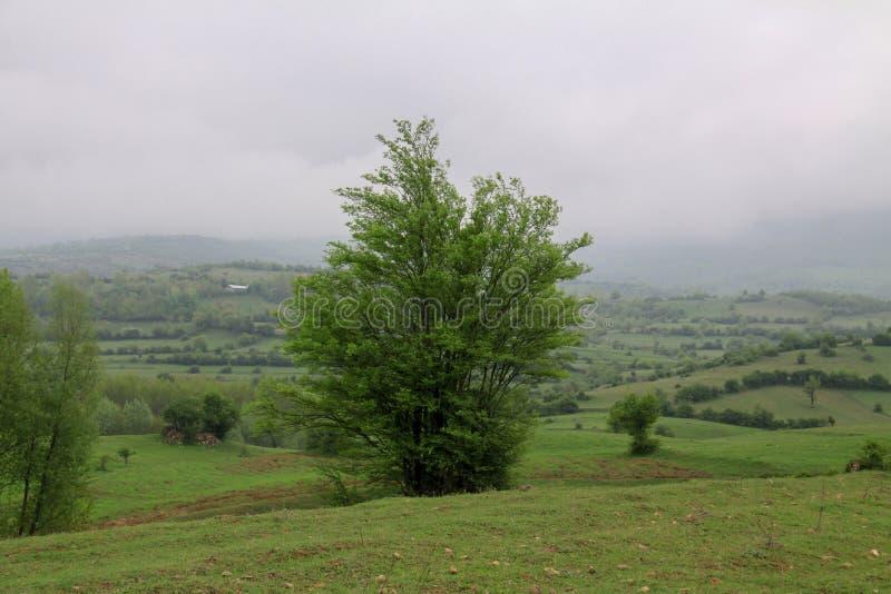 伊朗风景在与绿草平原和树的Gilan地区 免版税库存照片