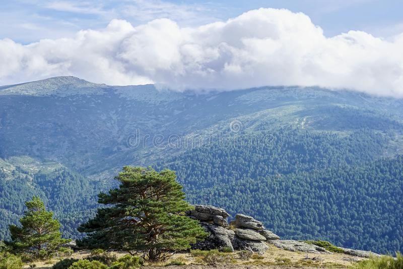伊比利亚半岛的常青森林风景 免版税图库摄影