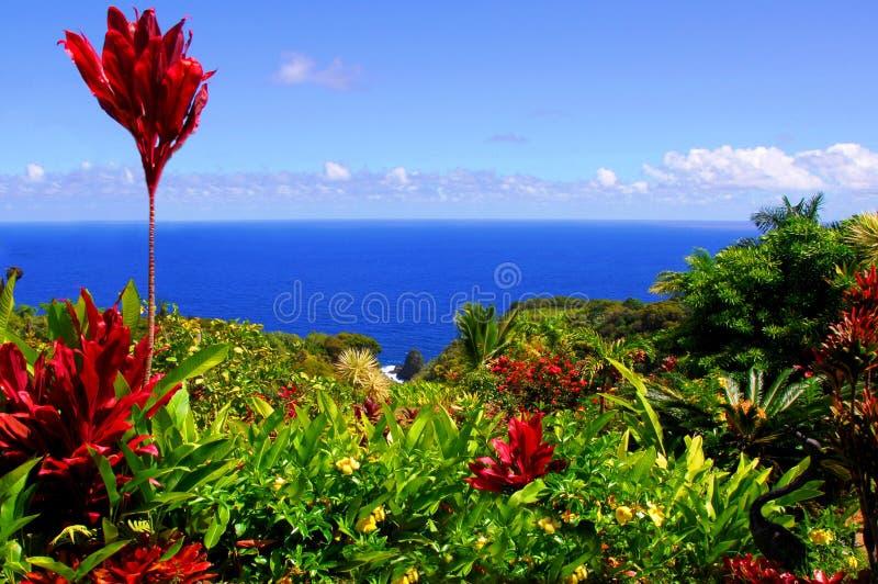 伊甸园庭院夏威夷毛伊 库存照片