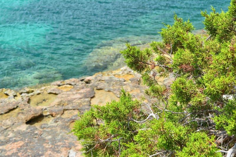 伊维萨岛海岛岩石海岸  免版税图库摄影