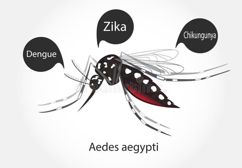 伊蚊属zika 向量例证