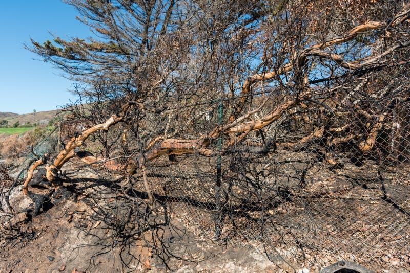伍尔西火的后果在尼古拉斯峡谷海滩的在马利布 免版税库存图片
