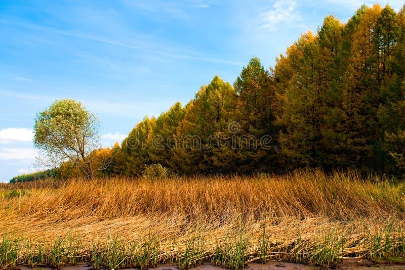 伏尔加河的银行的秋天森林 库存照片