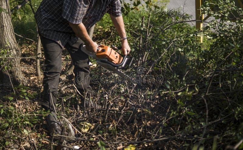伐木工人切口木柴木材树的日志记录器工作者在有橙色锯的森林里 免版税库存图片