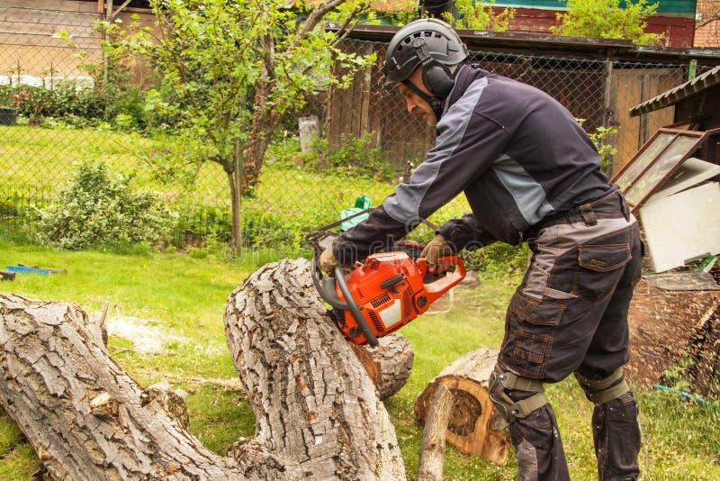 伐木工人切开锯 砍一棵大树的专业伐木工人在庭院里 免版税库存图片