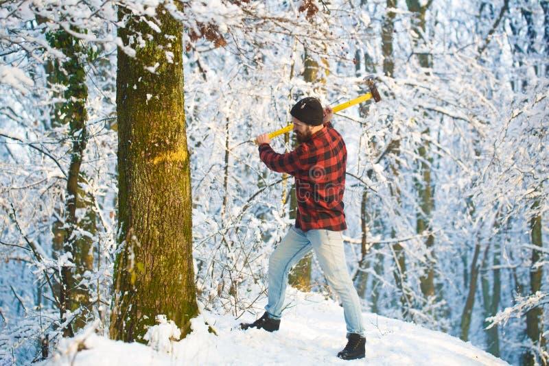 伐木工人在有轴的森林 樵夫工作在森林帅哥的,行家,伐木工人,轴 残酷地 图库摄影