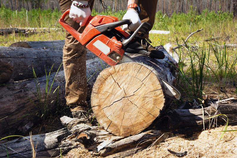 伐木工人工作者切开与一个专业锯的木柴 库存照片