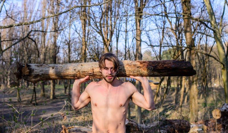 伐木工人或会集木头的樵夫性感的赤裸肌肉躯干 人成串珠状的残酷性感的伐木工人运载大重的日志 免版税库存图片