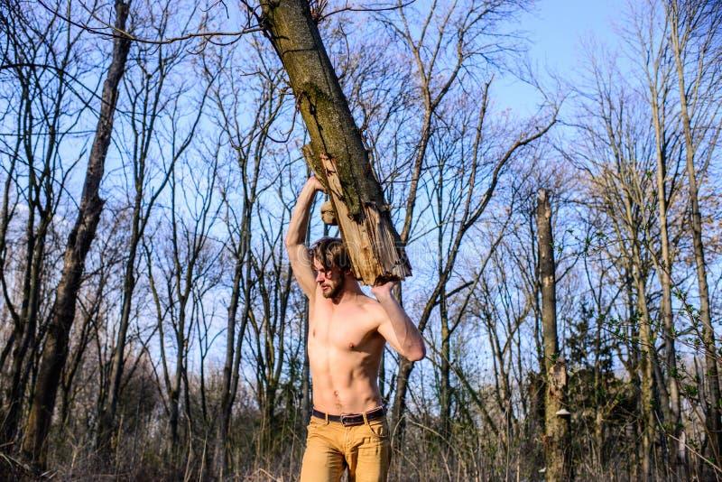 伐木工人或会集木头的樵夫性感的赤裸肌肉躯干 人残酷性感的伐木工人运载大注册森林 免版税图库摄影