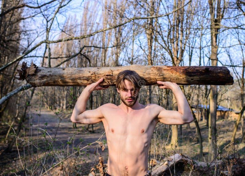 伐木工人或会集木头的樵夫性感的赤裸肌肉躯干 探索森林 人成串珠状的残酷性感的伐木工人运载 库存图片