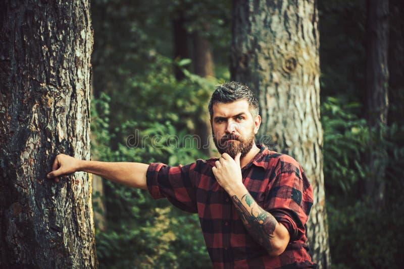 伐木工人衬衣的体贴的有胡子的人有在他的漫步在森林孤立徒步旅行者探索的奇迹的胳膊的纹身花刺的  库存图片