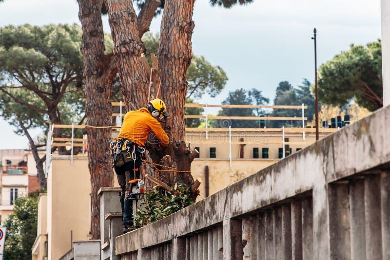 伐木工人锯与锯的树在锯木厂 库存图片