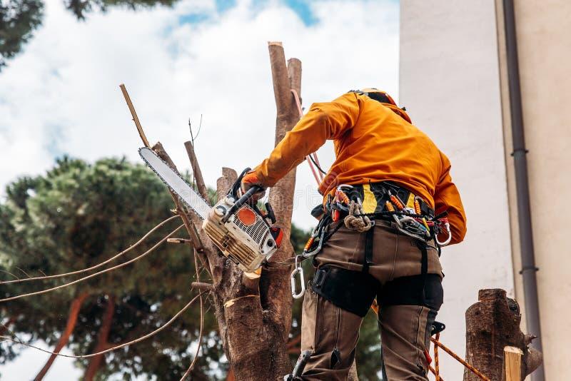 伐木工人锯与锯的树在锯木厂 免版税库存照片