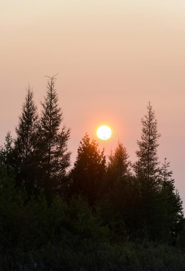 休伦湖与针叶树树剪影的风景日落 库存图片