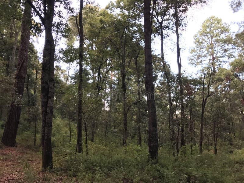 休息在一个美丽的森林里 免版税库存图片