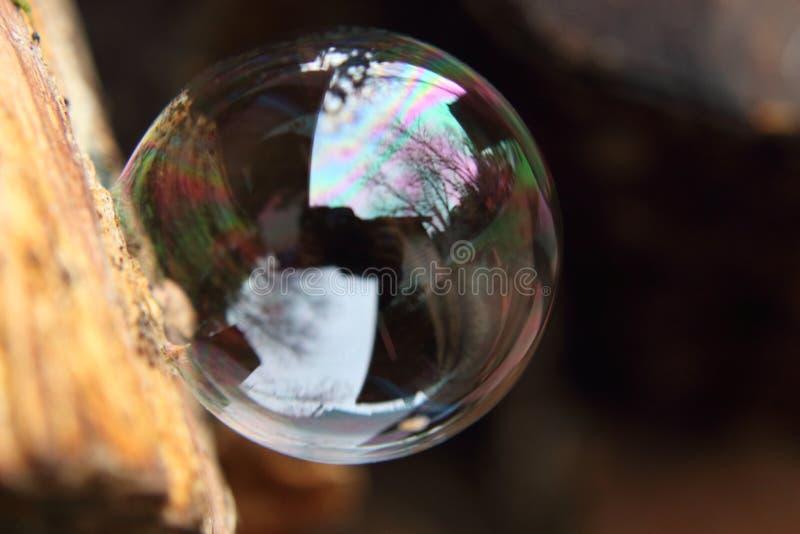 休息在一些木头一边的完全圆的泡影 免版税库存照片