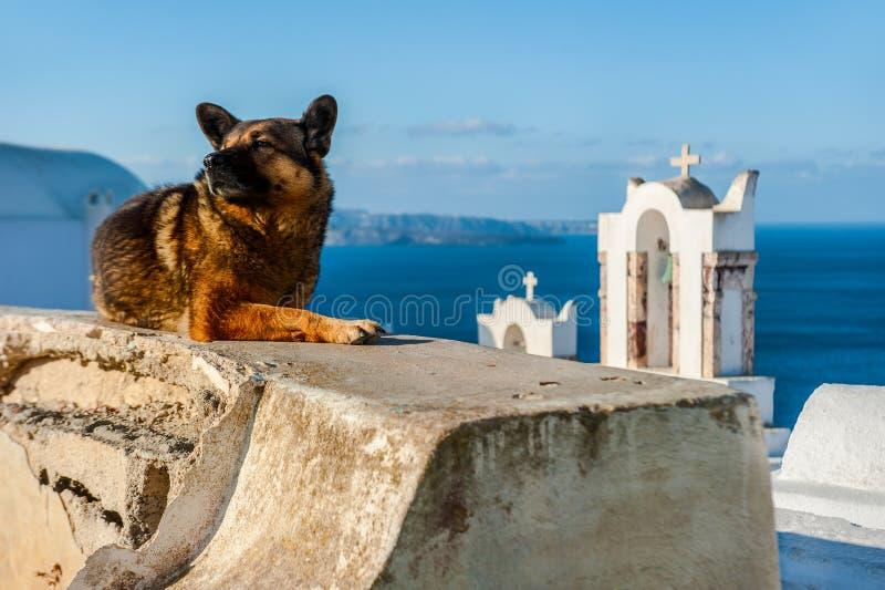 休息在其中一个的狗偶象教会中在圣托里尼,希腊 图库摄影
