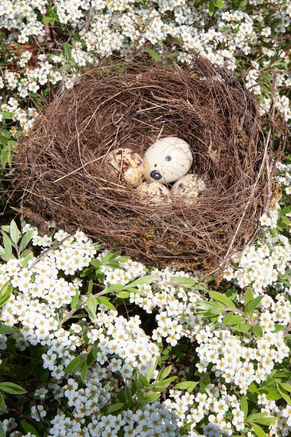 休息在巢树的美丽的小鸟鸡蛋 库存图片