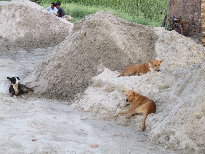 休息在沙子的街道狗 免版税图库摄影
