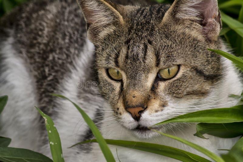 休息在草的野生猫 图库摄影