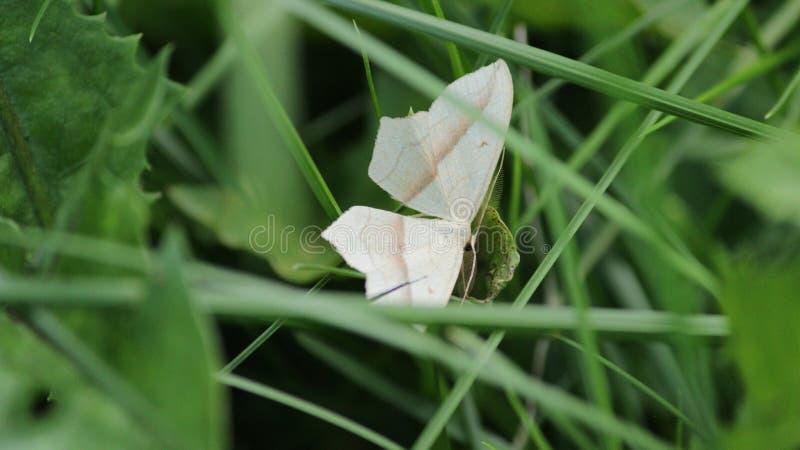 休息在草的蝴蝶 库存图片