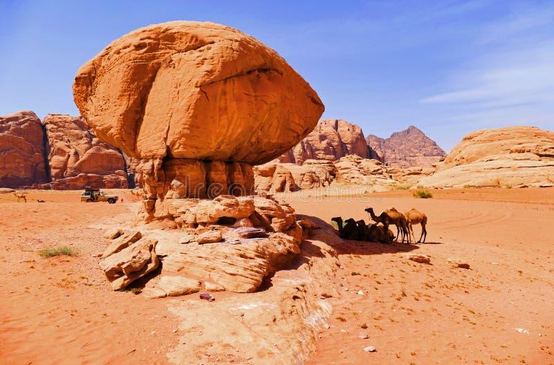 休息在蘑菇形状的岩石树荫下的骆驼风景看法有蓬卡车在瓦地伦沙漠,约旦 库存图片