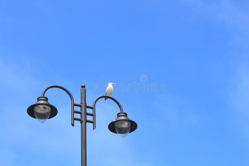 休息在路灯柱的海鸥 免版税图库摄影