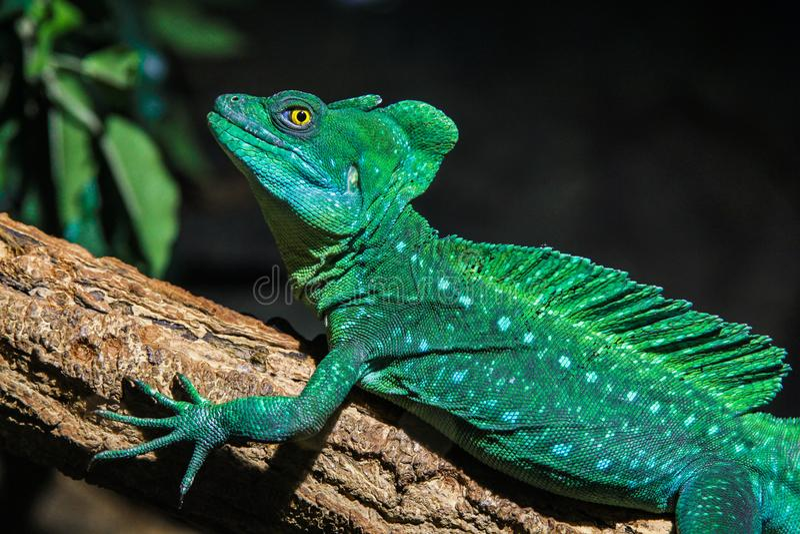 休息在阳光下的爬行动物 免版税图库摄影