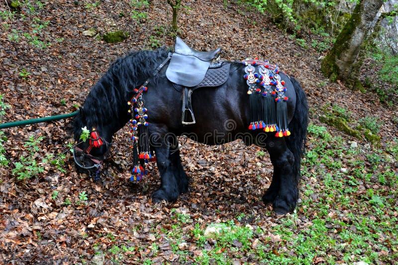 休息在juni游行期间的马 免版税库存图片