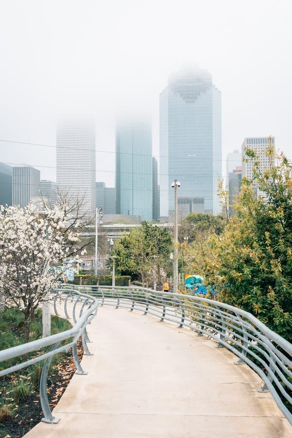 休斯敦地平线的看法在雾的,从水牛城多沼泽的支流公园在休斯敦,得克萨斯 免版税库存图片