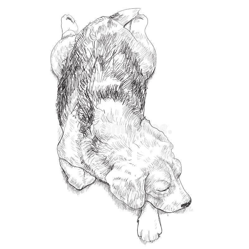 休眠小猎犬 向量例证