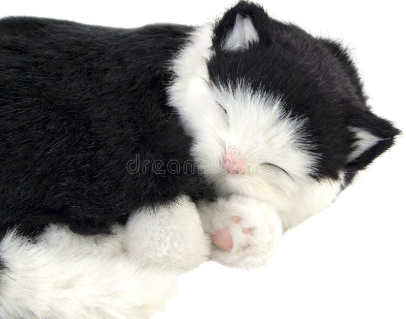 休眠猫 查出 库存图片