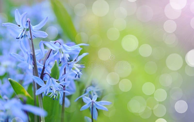 会开蓝色钟形花的草春天 库存图片