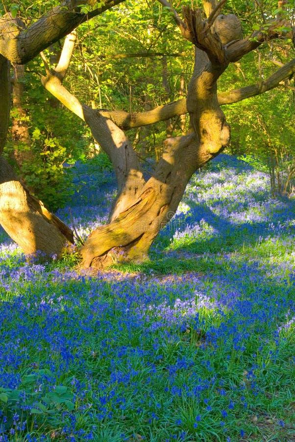 会开蓝色钟形花的草结构树 免版税图库摄影