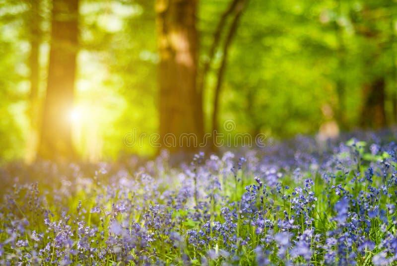 会开蓝色钟形花的草花森林细节  库存图片