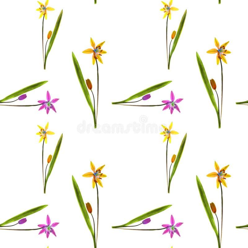 会开蓝色钟形花的草, scilla,报春花 花无缝的样式纹理  花卉背景,照片拼贴画 皇族释放例证