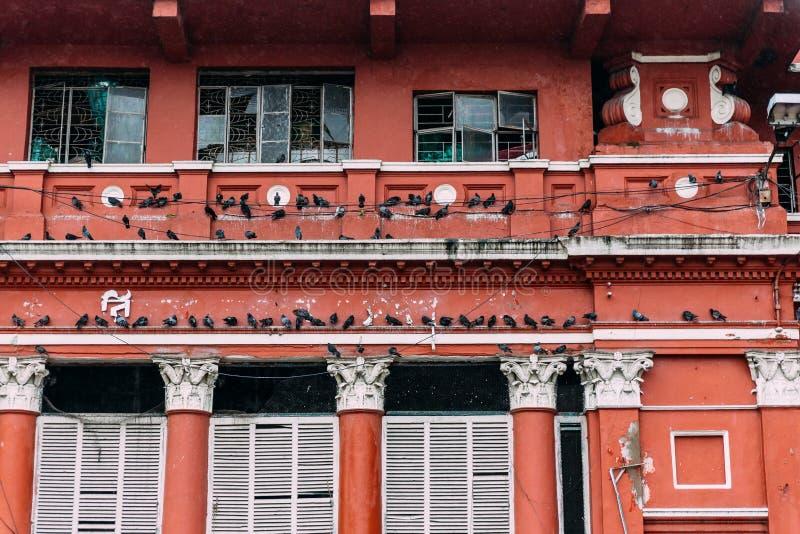 会集在电线和红色维多利亚女王时代的样式大厦的鸽子从胡格利河在穆利克加特花市场附近  库存图片