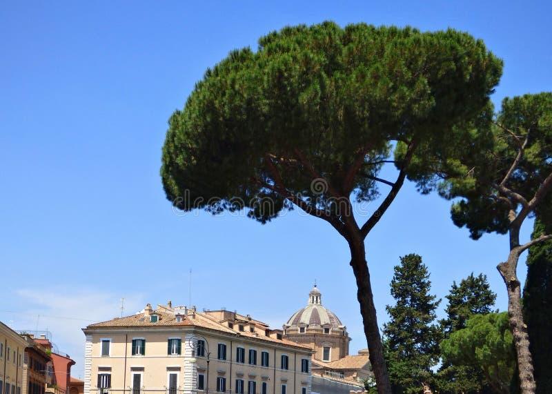 伞形树共同性向意大利有天空蔚蓝背景 图库摄影