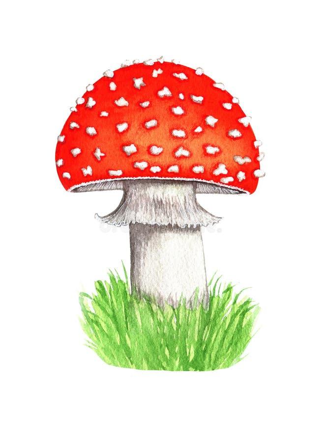 伞形毒蕈muscaria蘑菇,森林伞菌的水彩例证 在白色背景设计的元素隔绝的 免版税库存照片