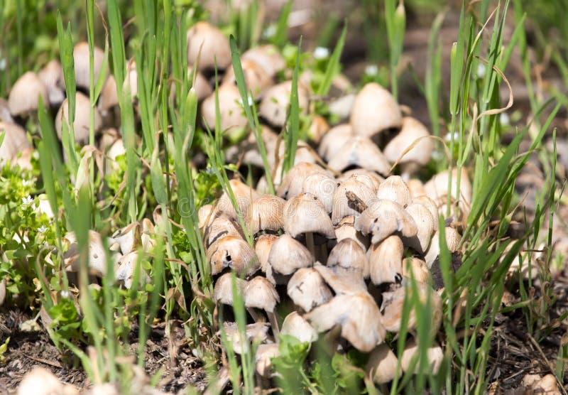 伞菌采蘑菇自然春天 库存照片