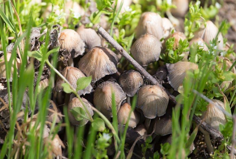 伞菌采蘑菇自然春天 图库摄影