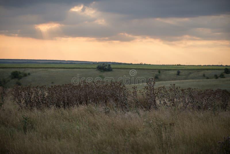 伟大的乌克兰干草原 图库摄影