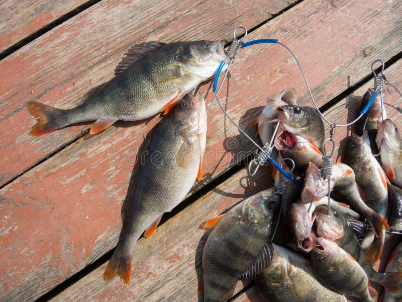 Download 伟大的抓住 库存照片. 图片 包括有 业余爱好, 生气勃勃, 概念, 捕鱼, 抓住, 茴香, 铸件, 原始 - 30328434