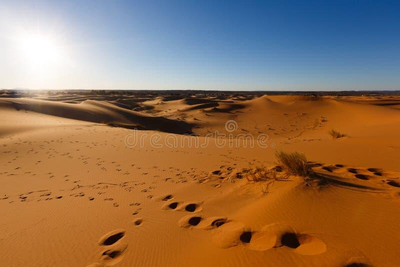 伟大的沙丘的令人惊讶的看法在撒哈拉大沙漠,尔格Chebbi,Merzouga,摩洛哥 免版税库存照片
